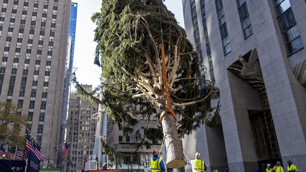 Rockefeller Christmas Tree 2020 Tallest Rockefeller Center Christmas tree goes up; lighting Dec. 2