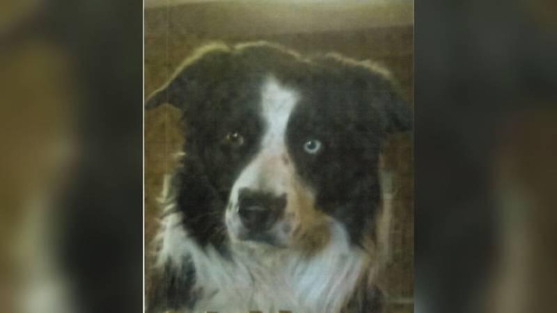 Missing KDU dog
