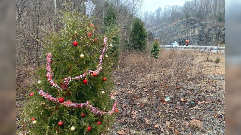 Along Kentucky 421 you'll spot several pine trees both small and tall that have been decorated...