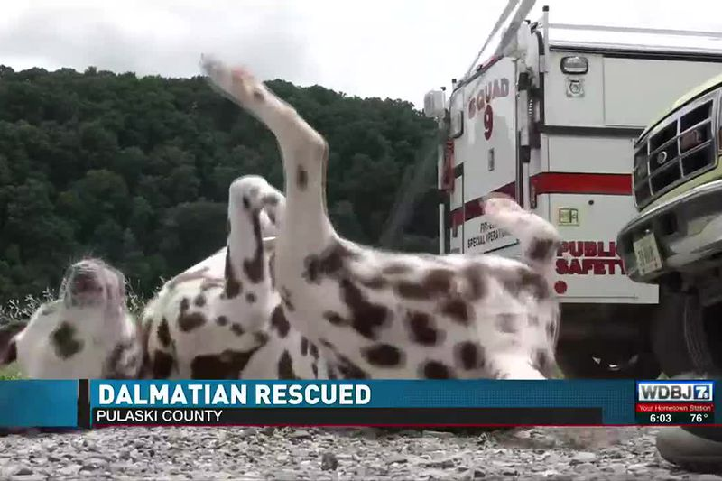 Pulaski County Dog Rescued June 22