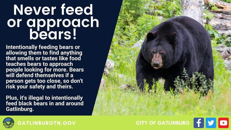Gatlinburg Bear Warnings