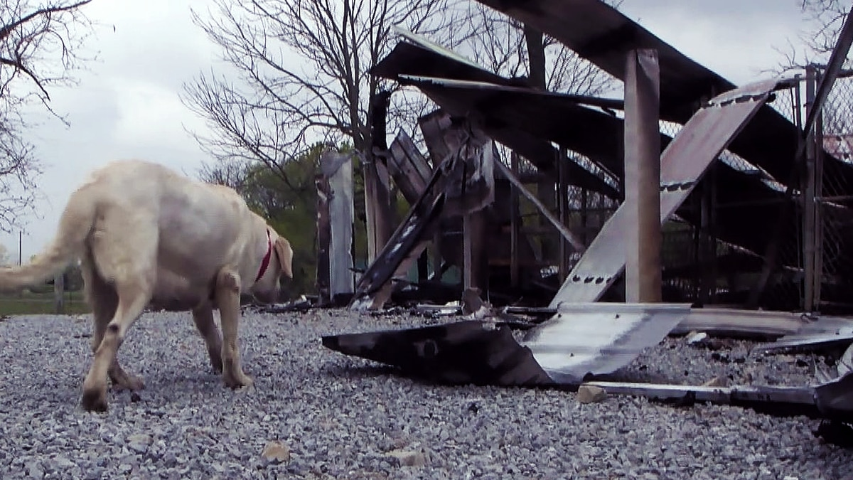 Tragedy occurred on April 23 as 54 of Ron Kraemer's dogs died after a fire destroyed his...