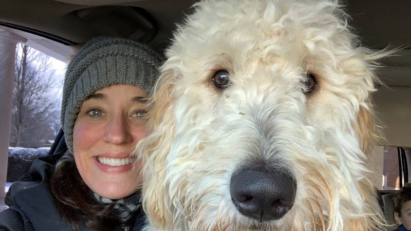 A sweet, one-year-old golden doodle, Charlie, was taken in a stolen car in the Industry Road...