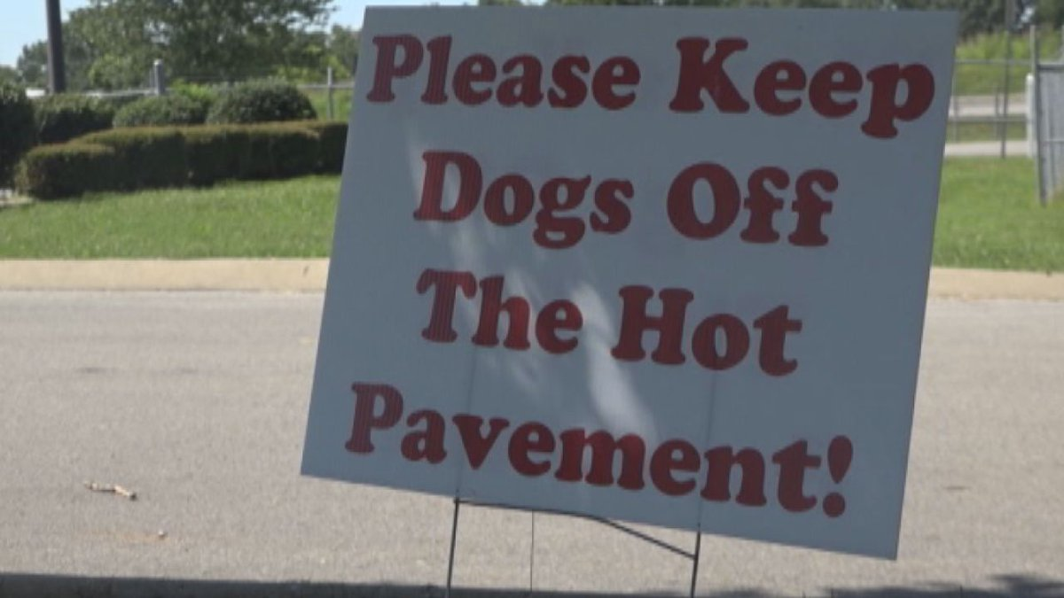Dogs walking on hot pavement can cause blistering on their paw pads which can lead to infections.