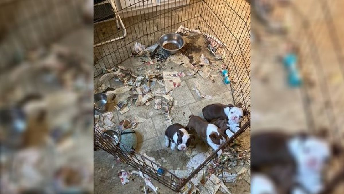 During the investigation, the officer discovered 63 dogs that were living in unsanitary...
