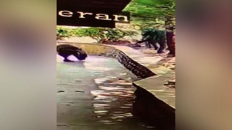 Employees at a Gatlinburg restaurant have a close call with a black bear / Source: Jody Lowe