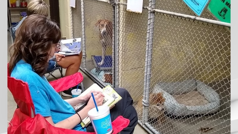 Fireworks can be frightening for many furry friends, but volunteers at the Kentucky Humane...