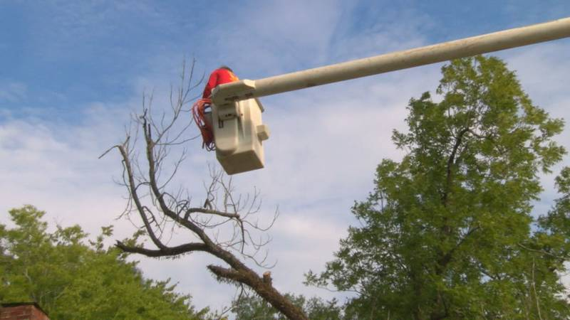 Saul Martinez utilizes a bucket truck to take him to the tree tops. (Source: KTRE Staff)