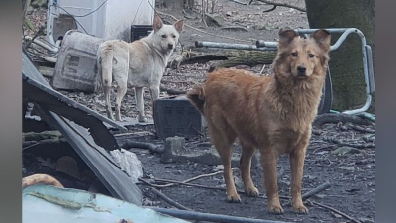Guardians of Rescue removed 76 dogs.